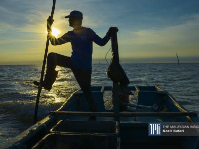 Traditional fisherman and cockle farmer Kahar Buntal scooping out cockles using 'pengeruk kerang' at his farm in Jeram, Kuala Selangor. – The Malaysian Insight pic by Nazir Sufari, September 29, 2020.