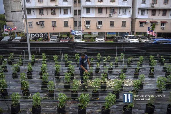 善用住宅空地 居民种植蔬菜自供自足