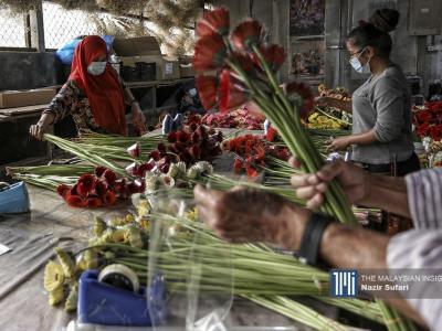 金马仑瓜拉特拉(Kuala Terla)花卉农场的员工,准备将出口新加坡的鲜花进行裁剪和包装。(摄影:Nazir Sufari)