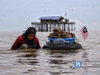 新手要抓住海螺并不容易,海螺生活在泥下约一英尺处。(摄影:Nazir Sufari )