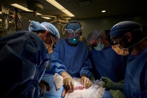 Ujian pindah organ babi ke badan manusia berjaya, kata saintis