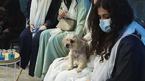 [WATCH] First dog cafe opens in conservative Saudi Arabia